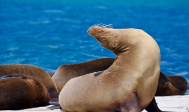 Galapagos Islands for All Budgets 7 Days